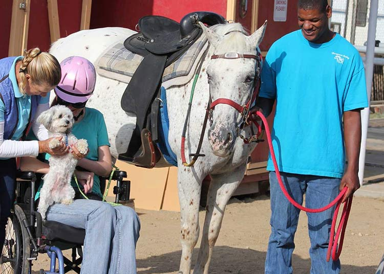 image: A happy woman in a wheelchair holding small dog next to horse