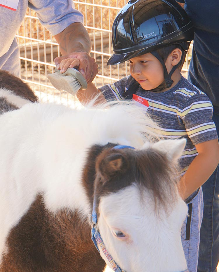 image: young boy brushing and connection with NDR horse, Luke